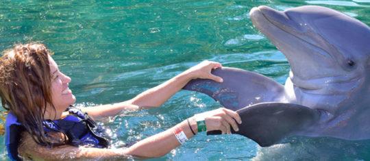 Découvrez les animaux marins
