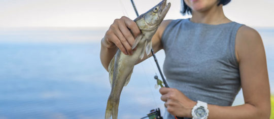 pêche au sandre