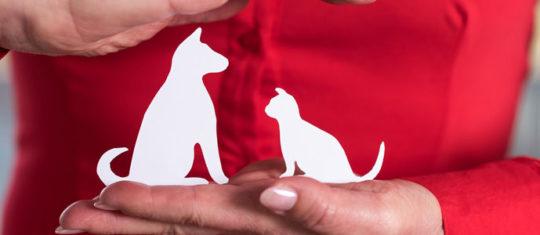 Assurance animaux en ligne